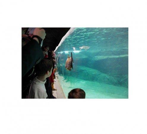 « Dreamnight at the zoo ! » Soirée de rêve pour les enfants au Parc zoologique de Paris