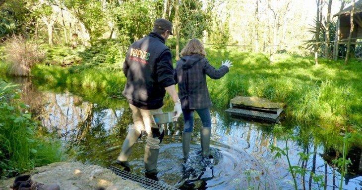 Soigneuse d'un jour au Bioparc de Doué la Fontaine