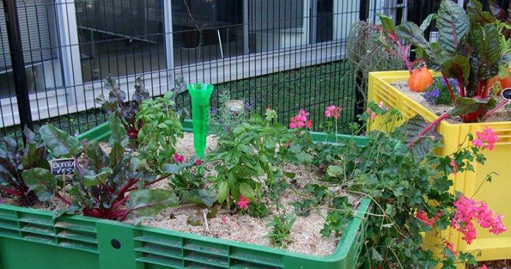 « Coup de pousse », le jardin potager du CHU de Rennes