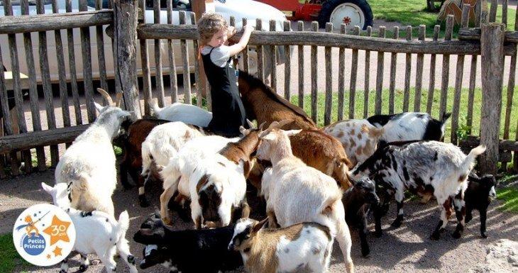 Une journée à la ferme