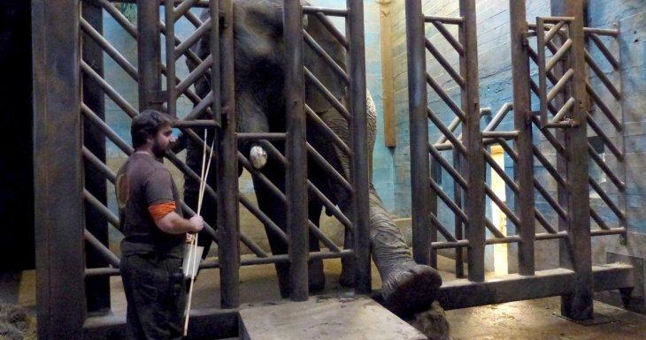 Visite VIP pour deux petits princes au parc zoologique de Thoiry